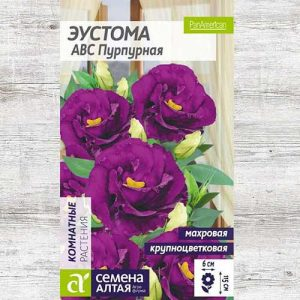 Эустома махровая ABC пурпурная