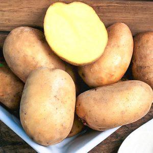Картофель Азарт