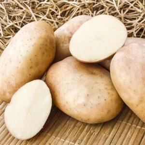 Картофель Голубизна