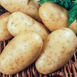 Картофель Леди Клер