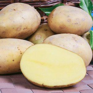 Картофель Вымпел