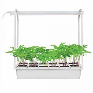 Набор Минисад для растений