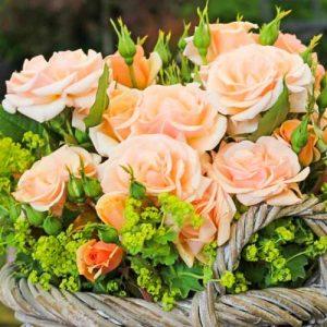 Роза флорибунда Свит Хоней