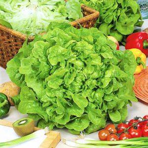 Салат маслянистый Изумительный