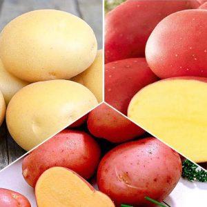 Суперпредложение! Комплект картофеля Рассыпчатый из 3 сортов