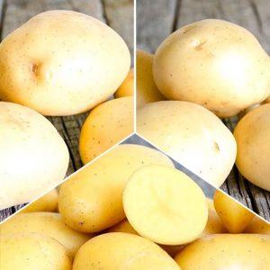 Суперпредложение! Комплект картофеля Скороспелый из 3 сортов
