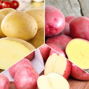 Суперпредложение! Комплект картофеля Урожайный из 3 сортов