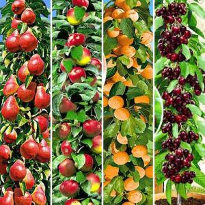 Суперпредложение! Комплект колоновидных деревьев Покорение Сибири из 4 саженцев