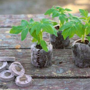 Торфяные таблетки Bt-31 для проращивания семян