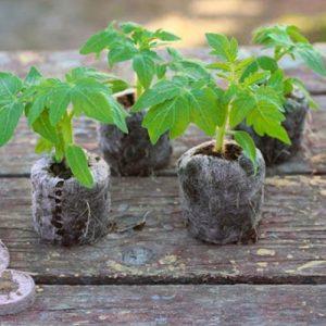Торфяные таблетки Bt-37 для проращивания семян